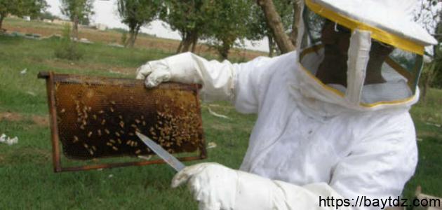 تربية نحل العسل