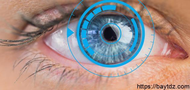 أجزاء العين