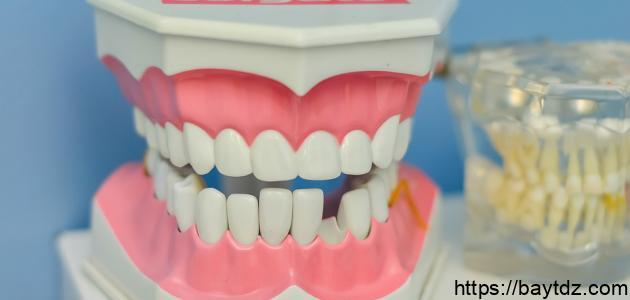 أجزاء فم الإنسان