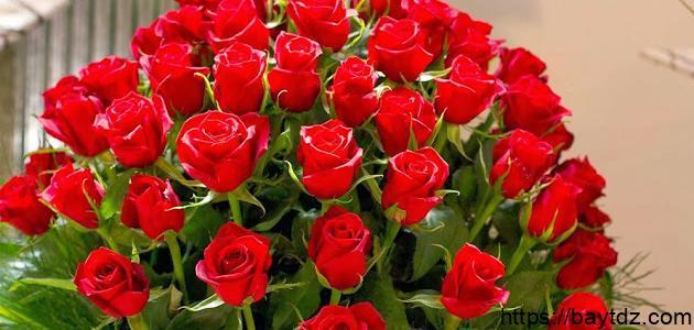 أجمل أنواع الزهور