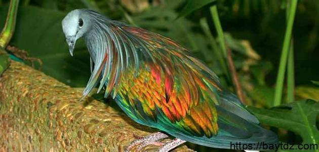 أجمل أنواع الطيور في العالم