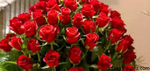 أجمل أنواع الورود