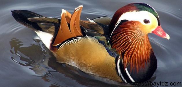 أجمل الطيور بالعالم