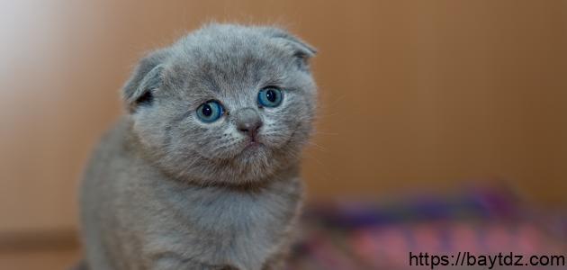 أجمل القطط الصغيرة في العالم