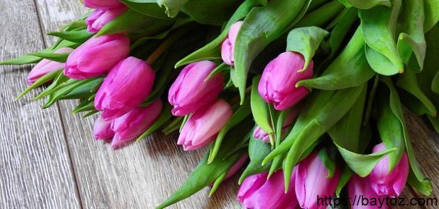 أجمل الورود الطبيعية