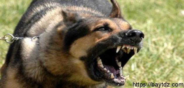 أشرس كلاب العالم