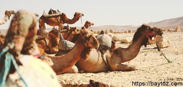 أشعار بشار بن برد في الغزل