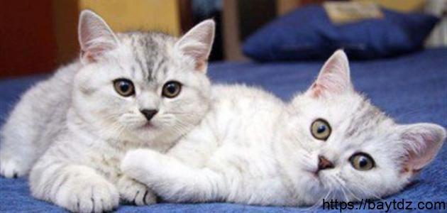 أضرار القطط على البنات