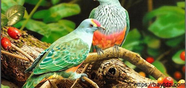 أضعف حاسة عند الطيور