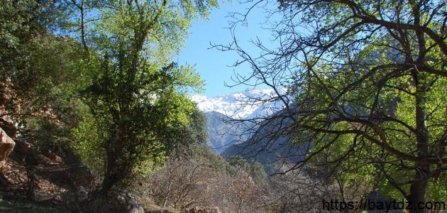 أكبر غابة في المغرب