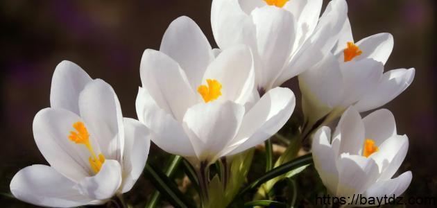 أنواع الورد والزهور