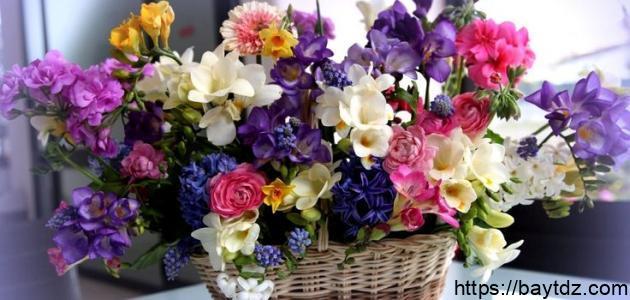 أنواع الورود في العالم