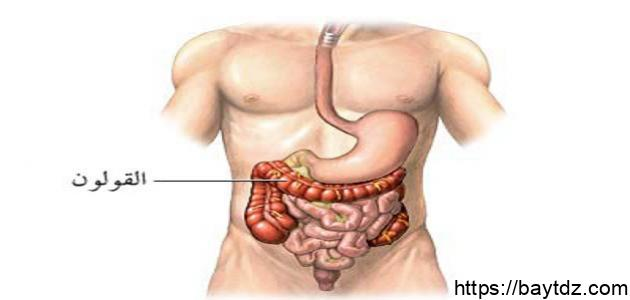 أين مكان القولون في جسم الإنسان