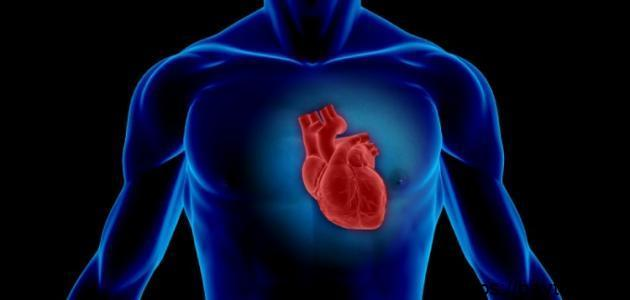 أين يقع القلب في جسم الانسان