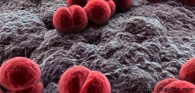 إلتهاب السحايا البكتيري
