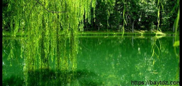 إلى ماذا يرمز اللون الأخضر