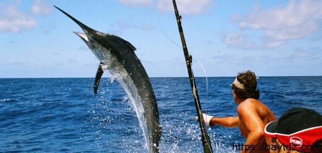 احسن وأفضل  طريقة لصيد السمك بالسنارة