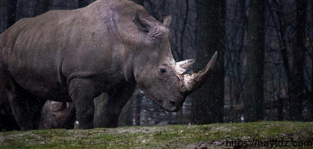 اسم يطلق على وحيد القرن