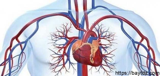 اضطراب الدورة الدموية