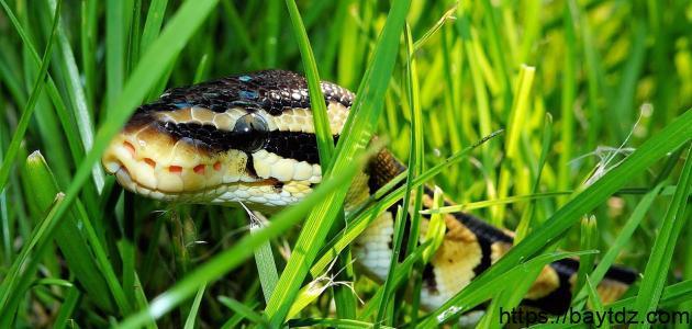 التخلص من الثعابين