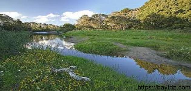 التوازن البيئي وكيفية المحافظة عليه