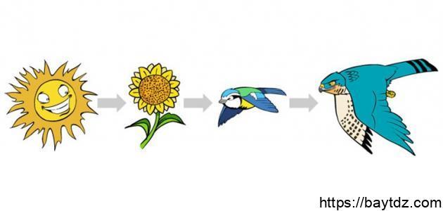 السلسلة الغذائية عند الحيوانات