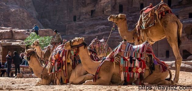 السياحة الأثرية في الأردن