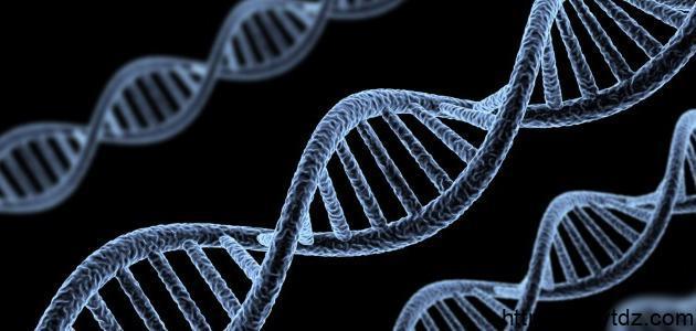 الصفات الوراثية وغير الوراثية