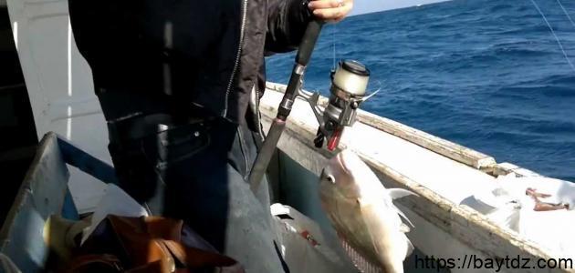 الصيد فى البحر الأحمر
