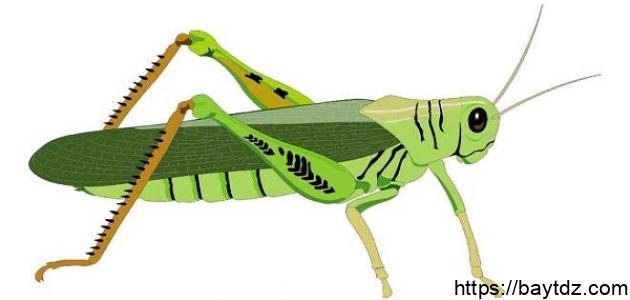 بحث عن الحشرات النافعة مثل النمل