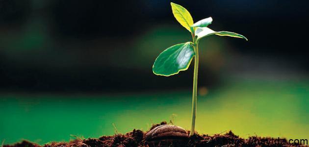 بحث عن النباتات