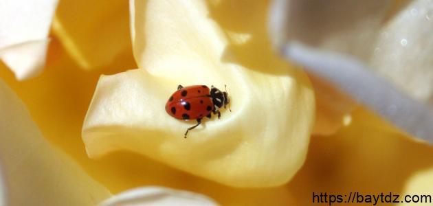 بحث عن بعض الحشرات النافعة