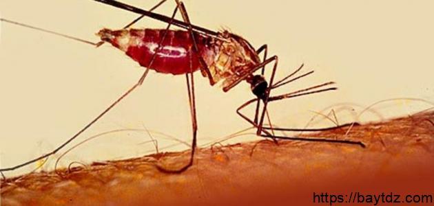 بحث عن مرض الملاريا