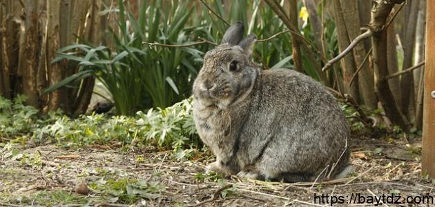 بيت الأرنب