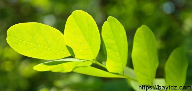 تأثير الضوء على النبات