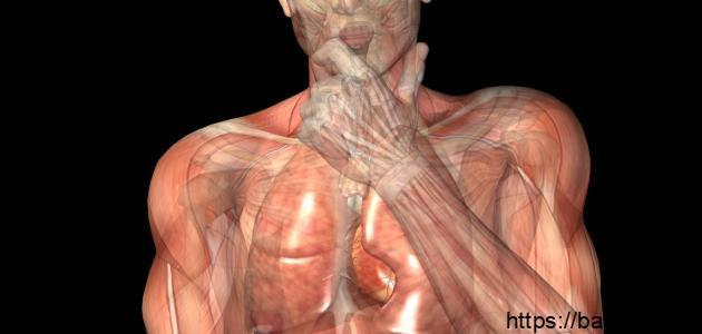 تركيب جسم الإنسان وأجهزته