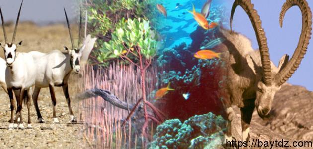 تنوع الكائنات الحية