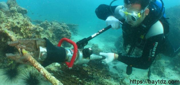 حماية البيئة البحرية