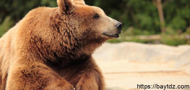 حماية الحيوانات المهددة بالانقراض
