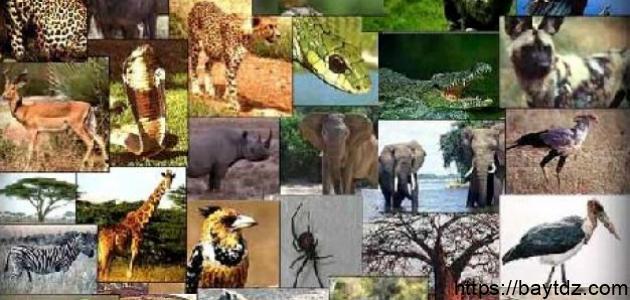 خصائص الكائنات الحية