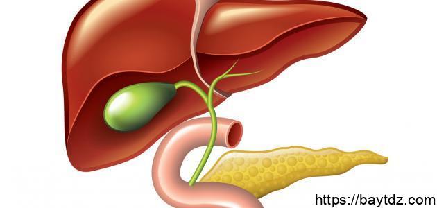 دهون الكبد وكيفية التخلص منها