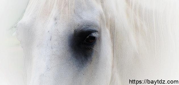 زمن الخيول البيضاء