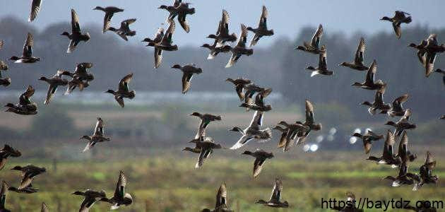 صيد العصافير