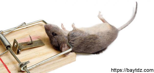 صيد الفئران