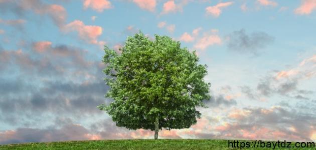 طرق التخلص من تلوث الهواء
