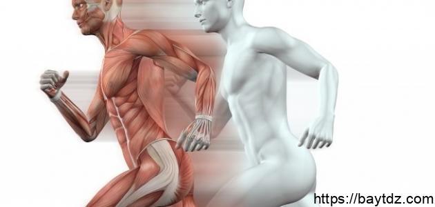 طرق الحفاظ على سلامة الجهاز العضلي