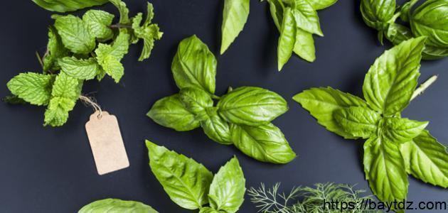 طرق القضاء على البق بالأعشاب