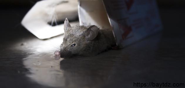 طرق القضاء على الفئران