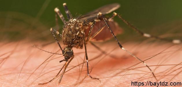 طرق انتقال مرض الملاريا