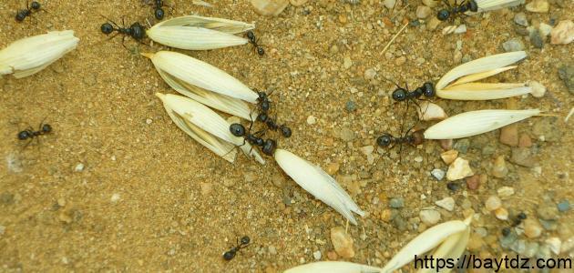 طرق حصول الحشرات على غذائها